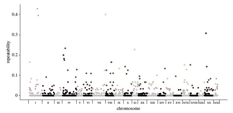 Convergent evolution in the genomics era