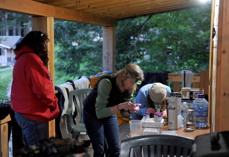 June 2013: Katie Peichel making crosses in the field with Carole Tanner and Dieta Hanson near Roberts Lake, Vancouver Island, Canada.