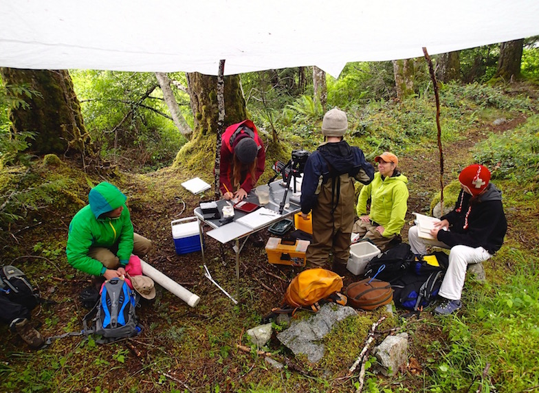 June 2013: Processing lake and stream sticklebacks in the field on Vancouver Island, British Columbia, Canada.